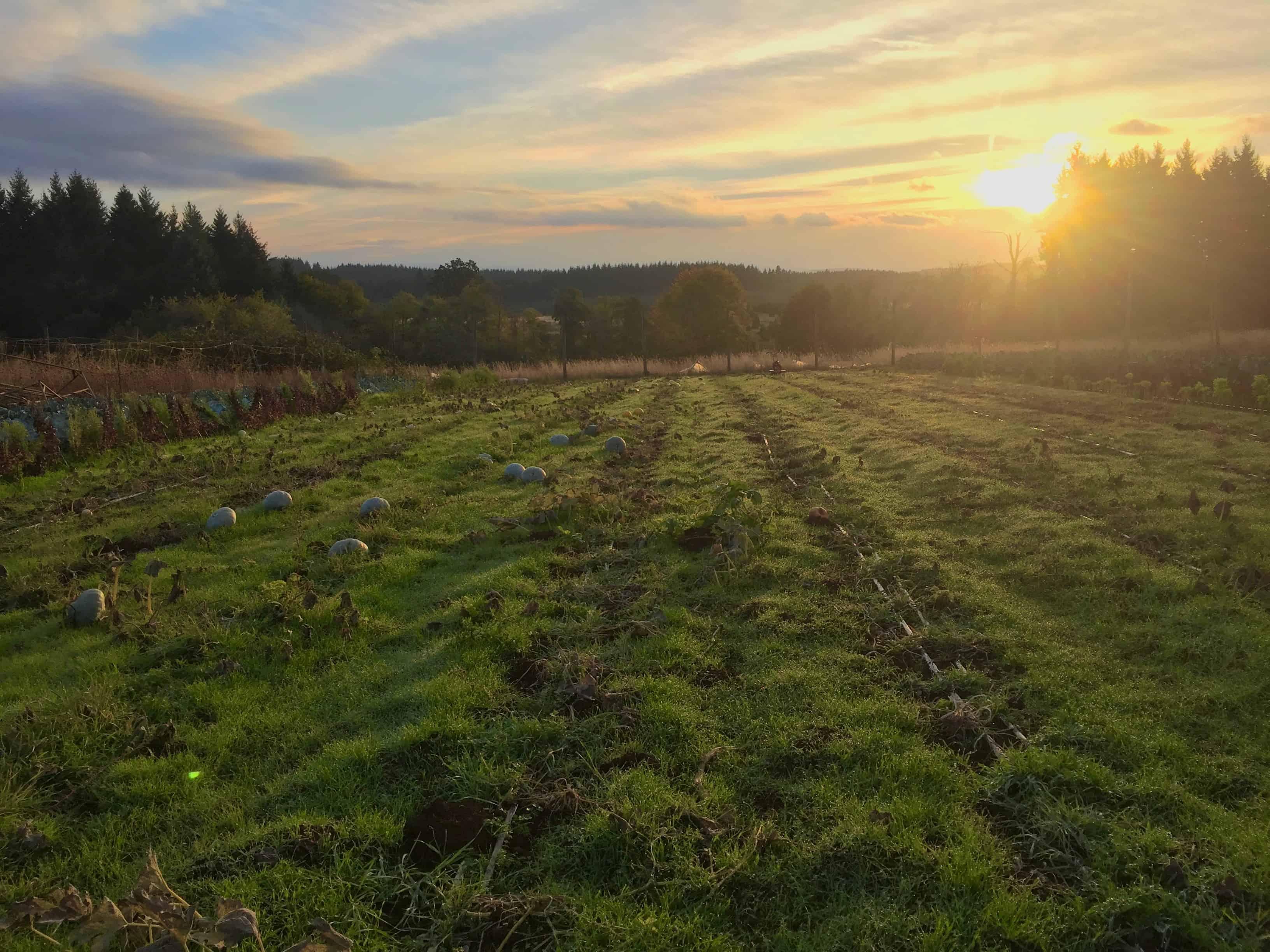 WWOOFing: Work Exchange on an Organic Farm in Oregon - Spin